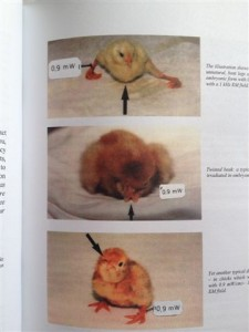 20120818-photo of mutated chicks